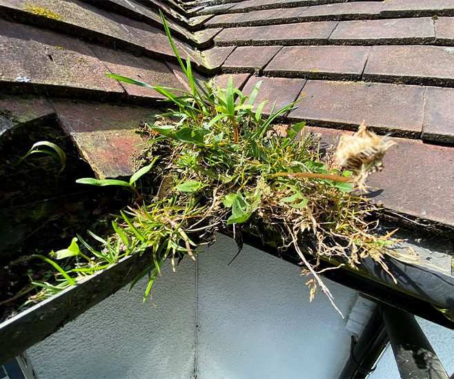Gutter Cleaning in Summer